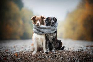 Связанные шарфом