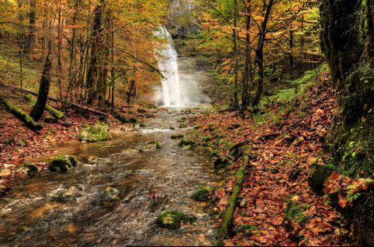 Осень в лес пришла
