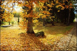 Фото бесплатно осень, пейзаж, дорога, деревья, дерево, листопад, парк, утро, осеннее утро, красочное утро