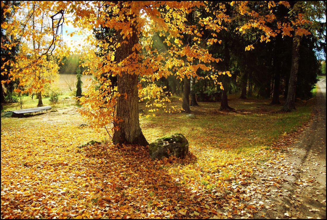 Фото бесплатно осень, пейзаж, осень утро - на рабочий стол