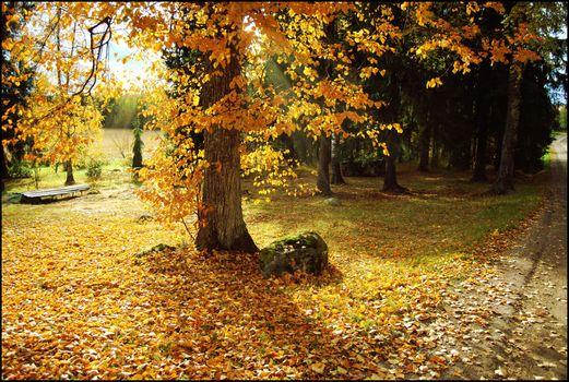 Заставки осень,пейзаж,дорога,деревья,дерево,листопад,парк,утро,осеннее утро,красочное утро