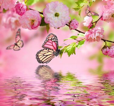 Бабочка прямо над водой · бесплатное фото