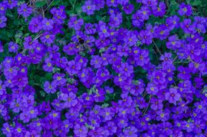 Заставки Цветочный ковер, цветы, цветение