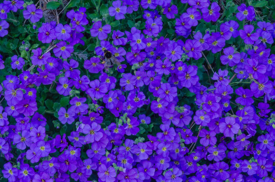 Фото бесплатно Цветочный ковер, цветы, цветение - на рабочий стол
