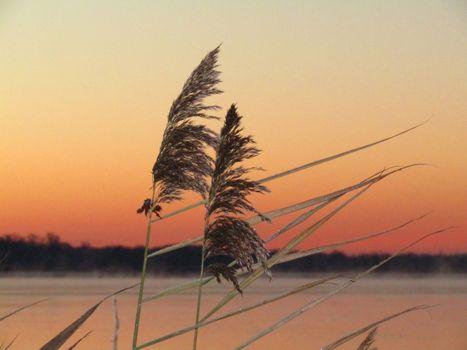 Заставка озеро, трава