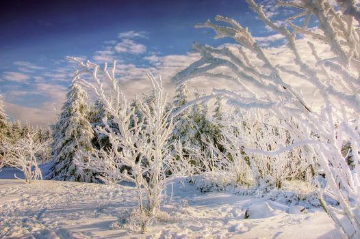 Веточки в снегу
