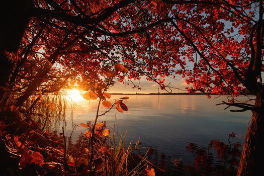 Фото бесплатно озеро, восход, дерево