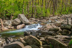 Фото бесплатно пейзаж, деревья, Национальный парк Грейт-Смоки-Маунтинс