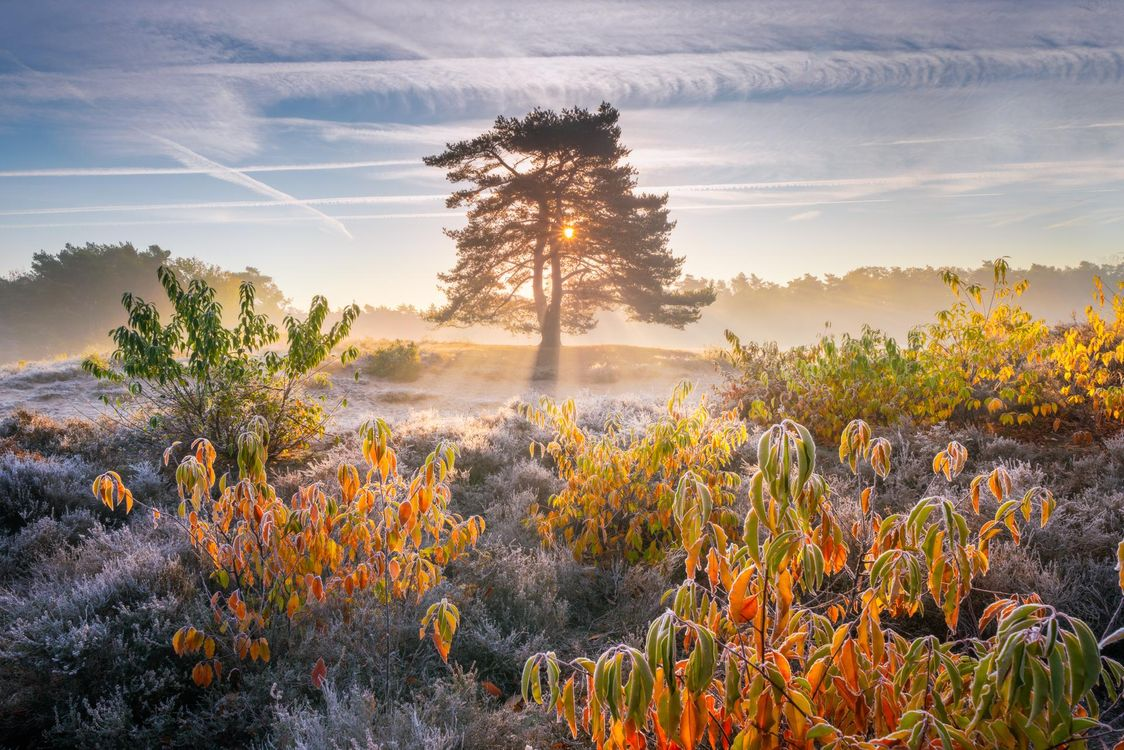 Фото бесплатно Осенние краски, краски осени, утро, рассвет, поле, туман, деревья, иней, природа, пейзаж, пейзажи